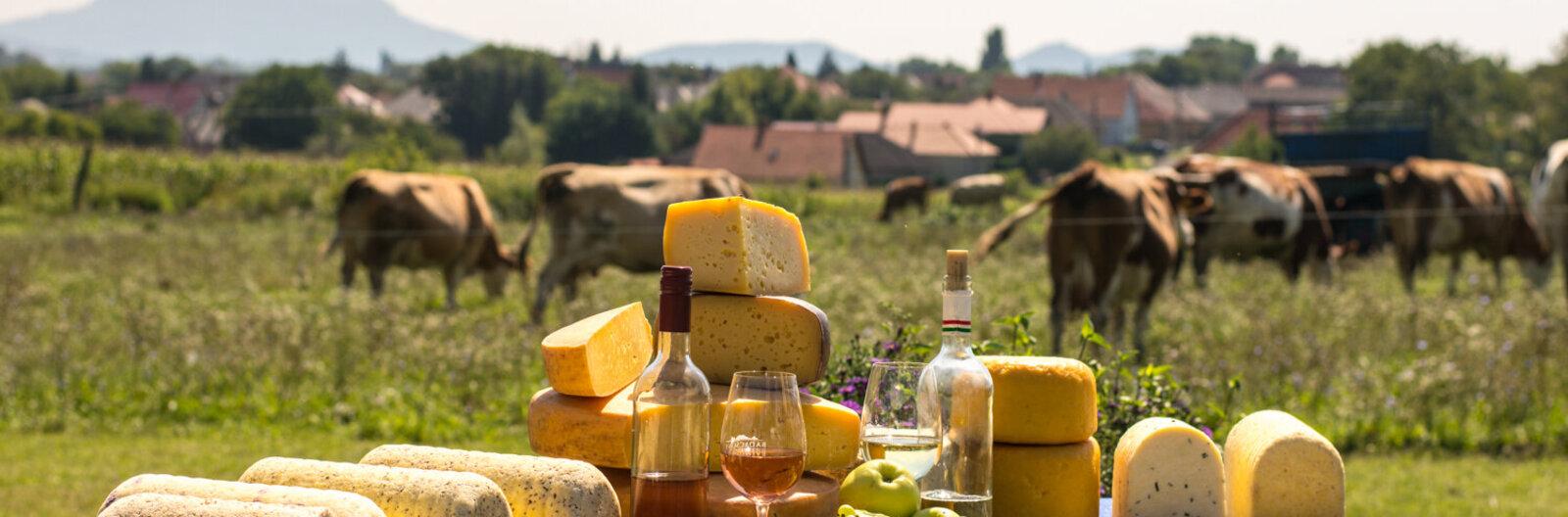 Sajtból van a Balaton! - 12 sajtműhely az északi partról