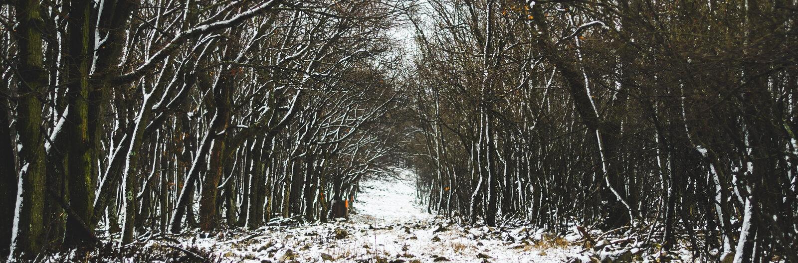 A Bakonynak a tél is nagyon jól áll – 4 túratipp téli kiránduláshoz