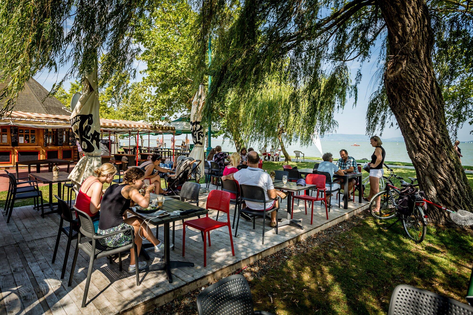 Borok a Balaton-parton