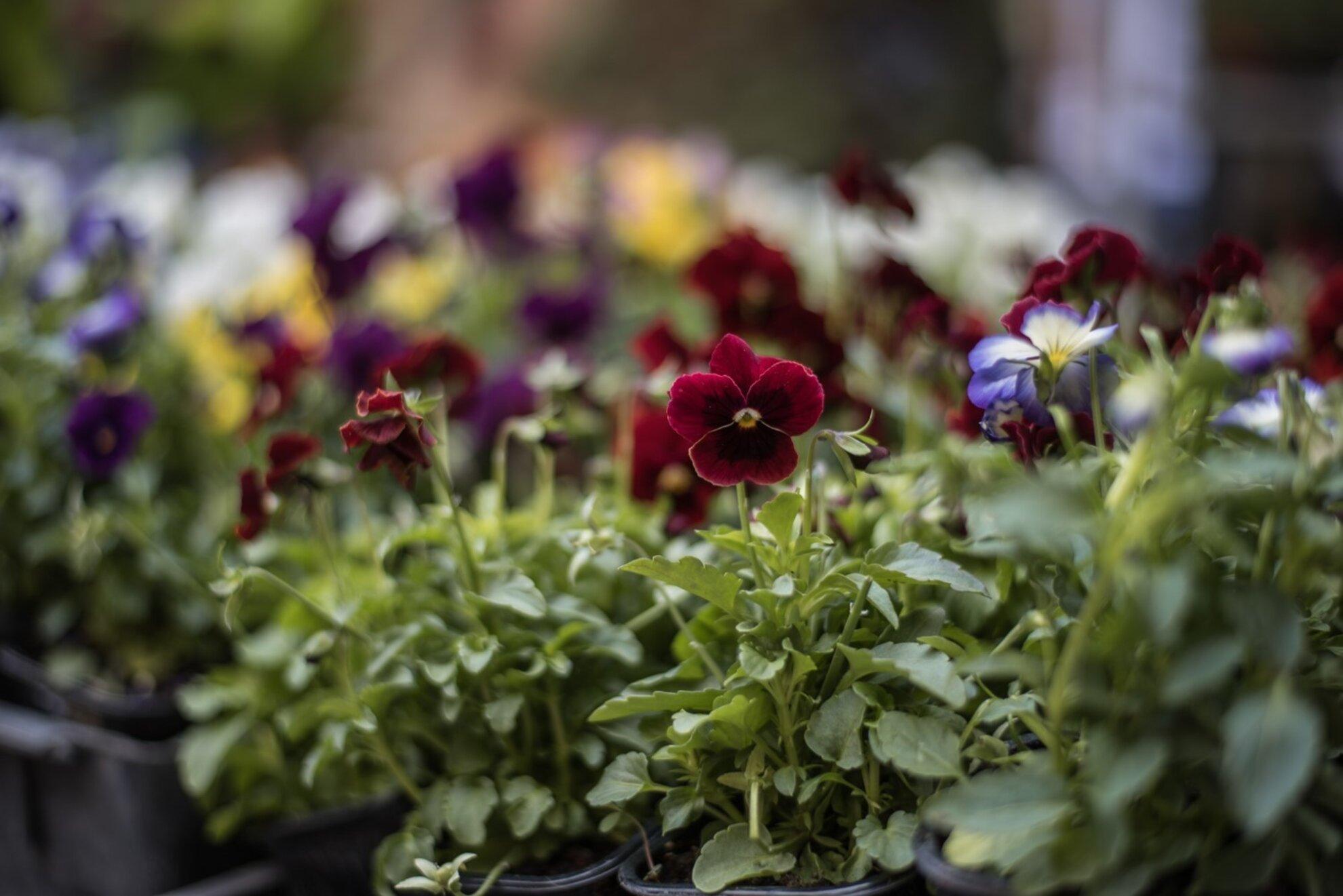 Kiskertpiac - Plant lovers sunday