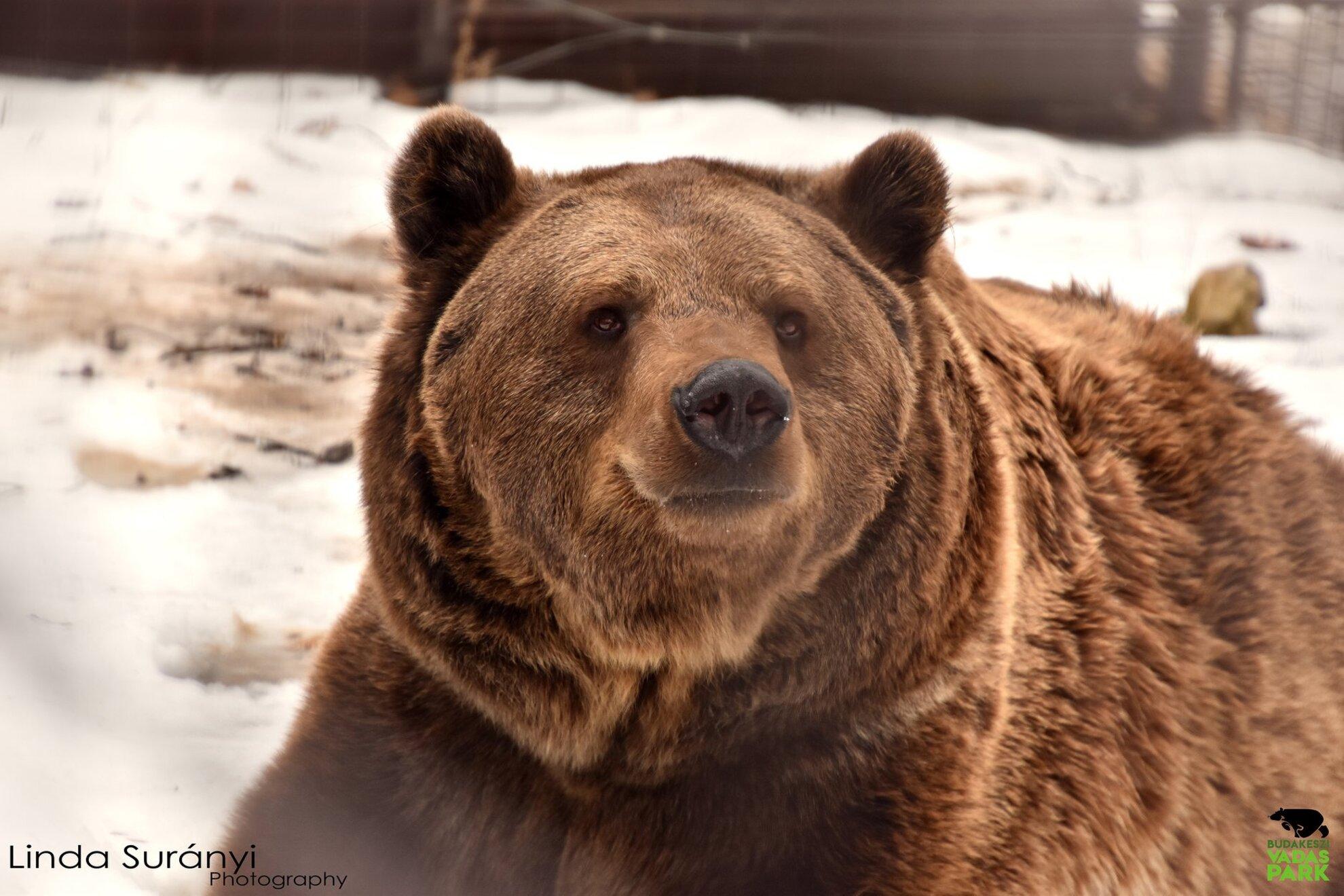 Medve-les 2020