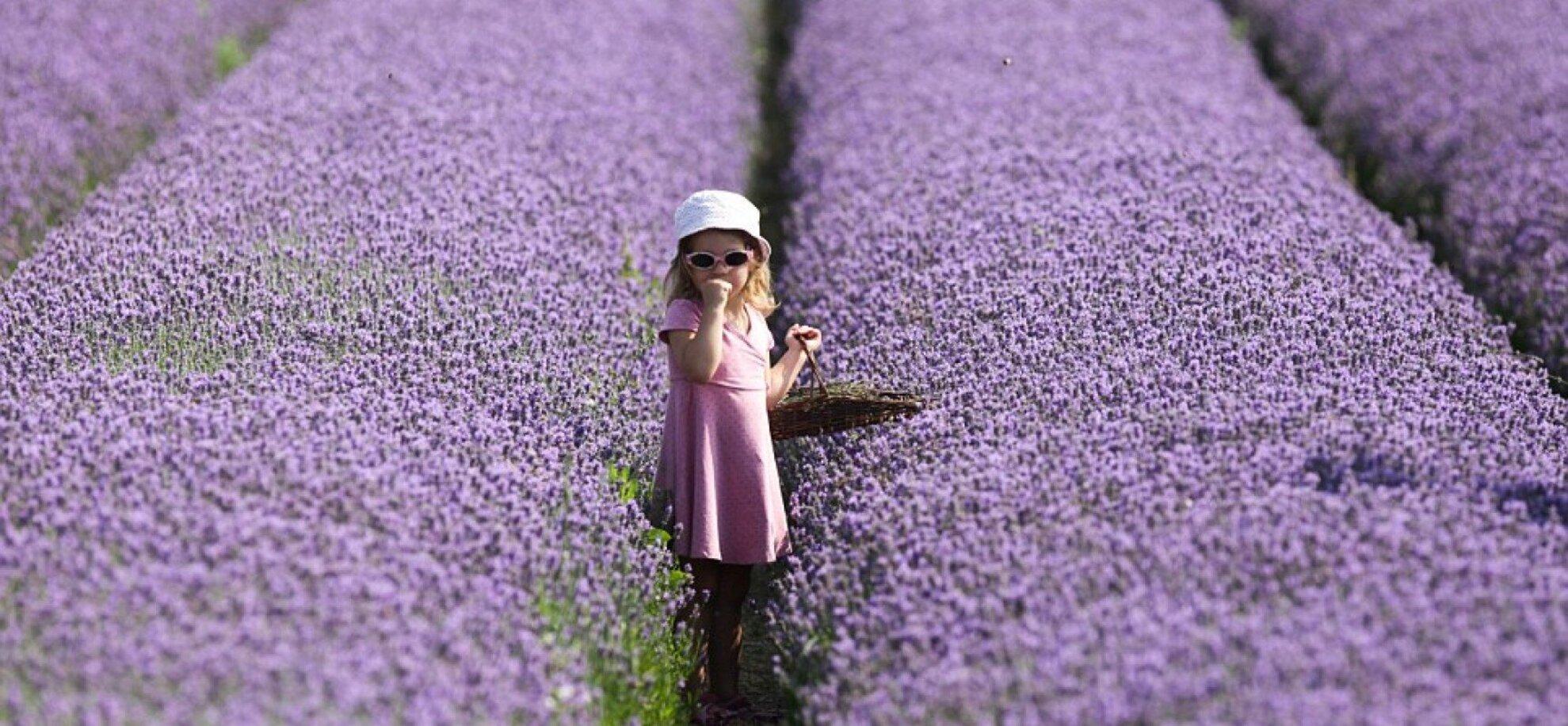 11th Lavender Festival Tihany