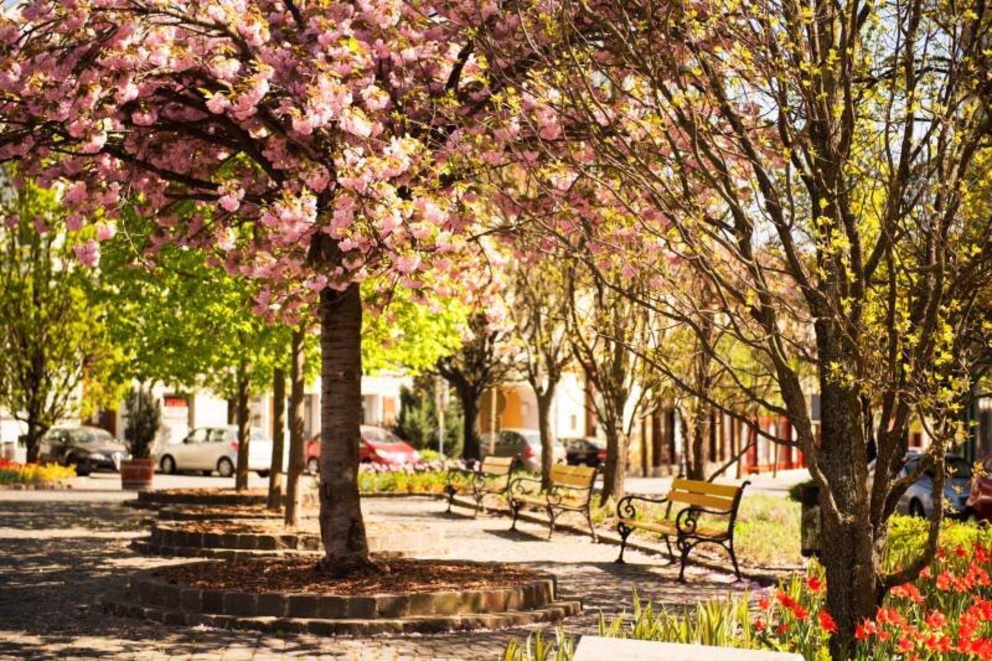Tavaszi Tekergő – Veszprémi Turisztikai Szezonnyitó és Vásár 2019