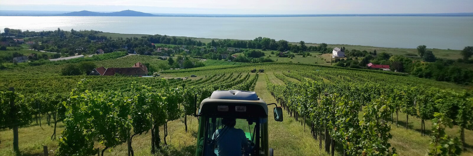 5 up-and-coming Balaton wineries to look out for
