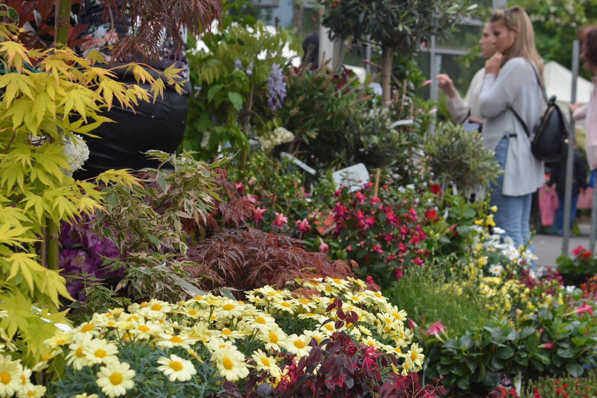 ELMARAD! - Tavaszkert Dísznövény Szakkiállítás és Vásár 2020