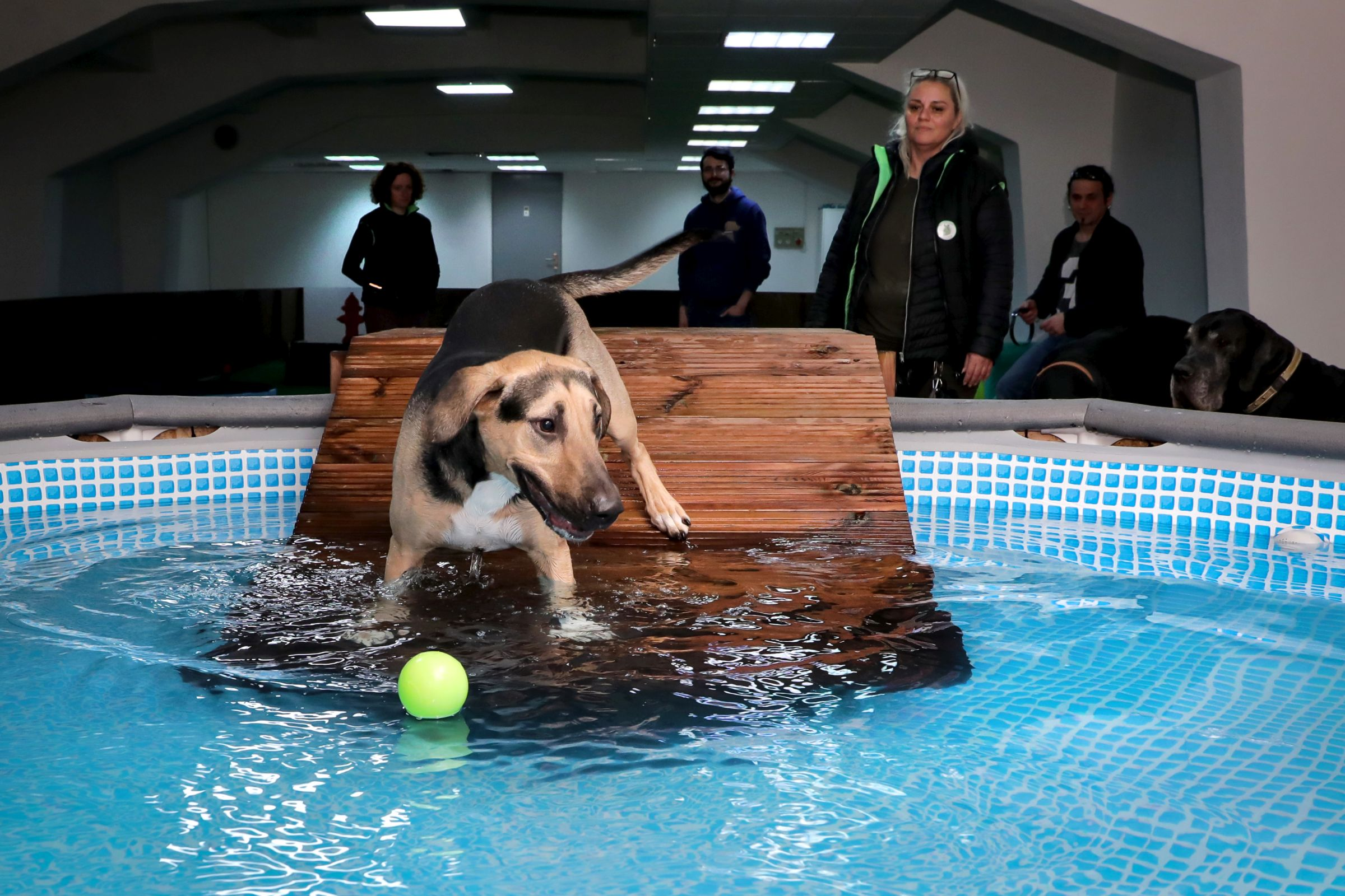 Treat your pooch to a dog pool and indoor park in Budapest