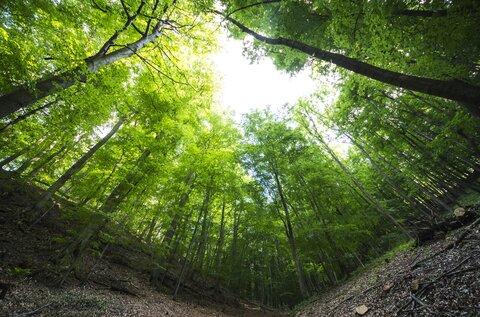 Ámos-hegyi pihenőerdő, tanösvény és kilátó