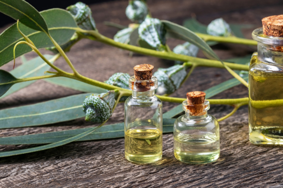 Is Eucalyptus Oil really good for you?