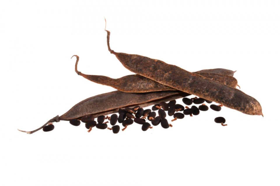 Acacia Fiber and Its Many Health Benefits