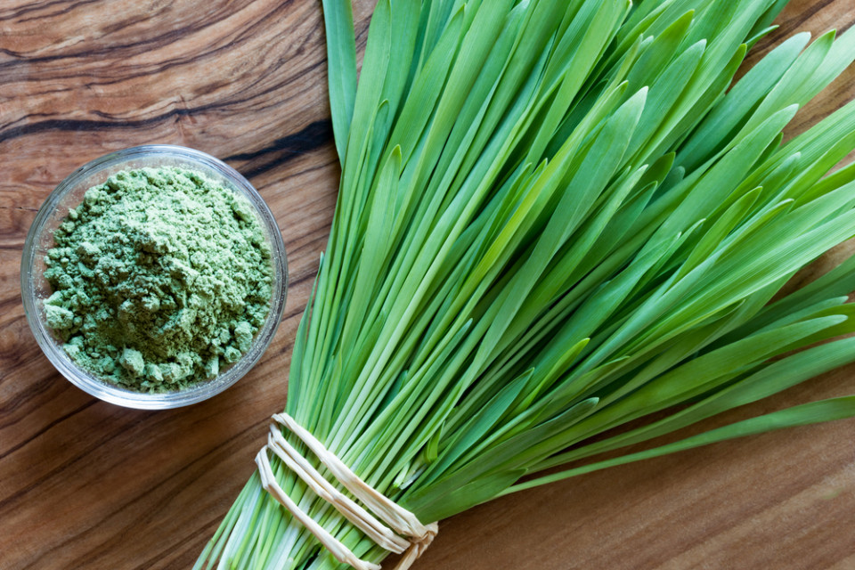 How Barley Grass Can Change Your Life