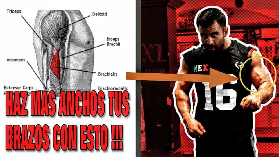 Tu Brazo mas Ancho con este ejercicio! ¡Nadie hace este ejercicio bien!
