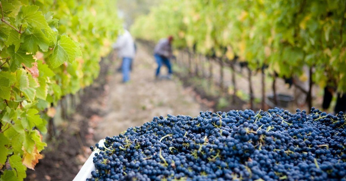 買一個法國波爾多葡萄園要多少錢?購買布根地特級園的夢想遙遙無期嗎?
