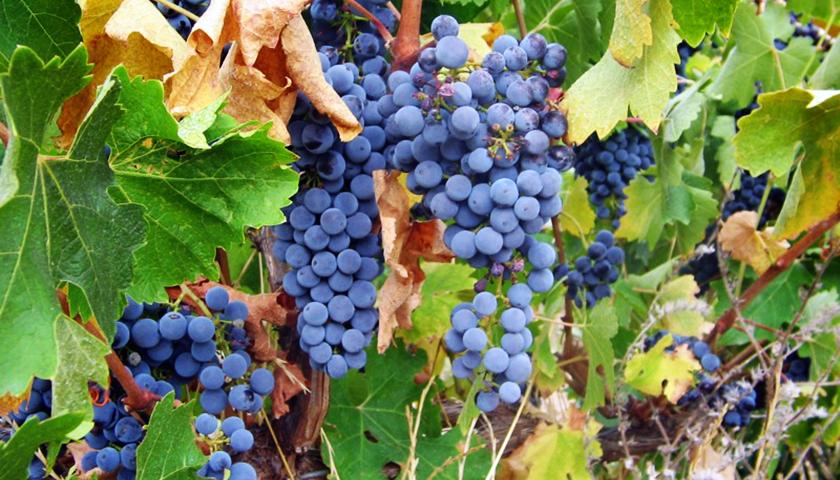 【Wine Club精選】值得細品的義大利風情