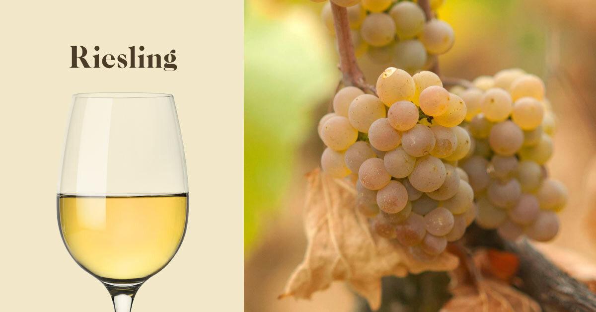 【葡萄品種】白酒愛好者一定要知道的葡萄 - 麗絲玲(Riesling)
