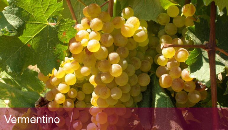 義大利葡萄品種 A 到 Z (最終回)