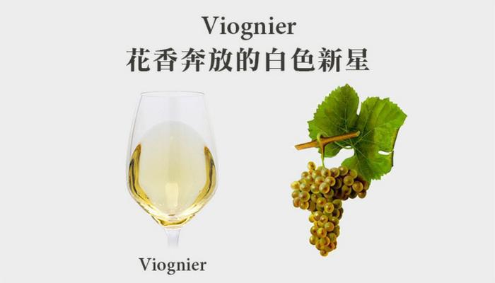 來自隆河的驕貴白葡萄 - 維歐尼耶 (Viognier)