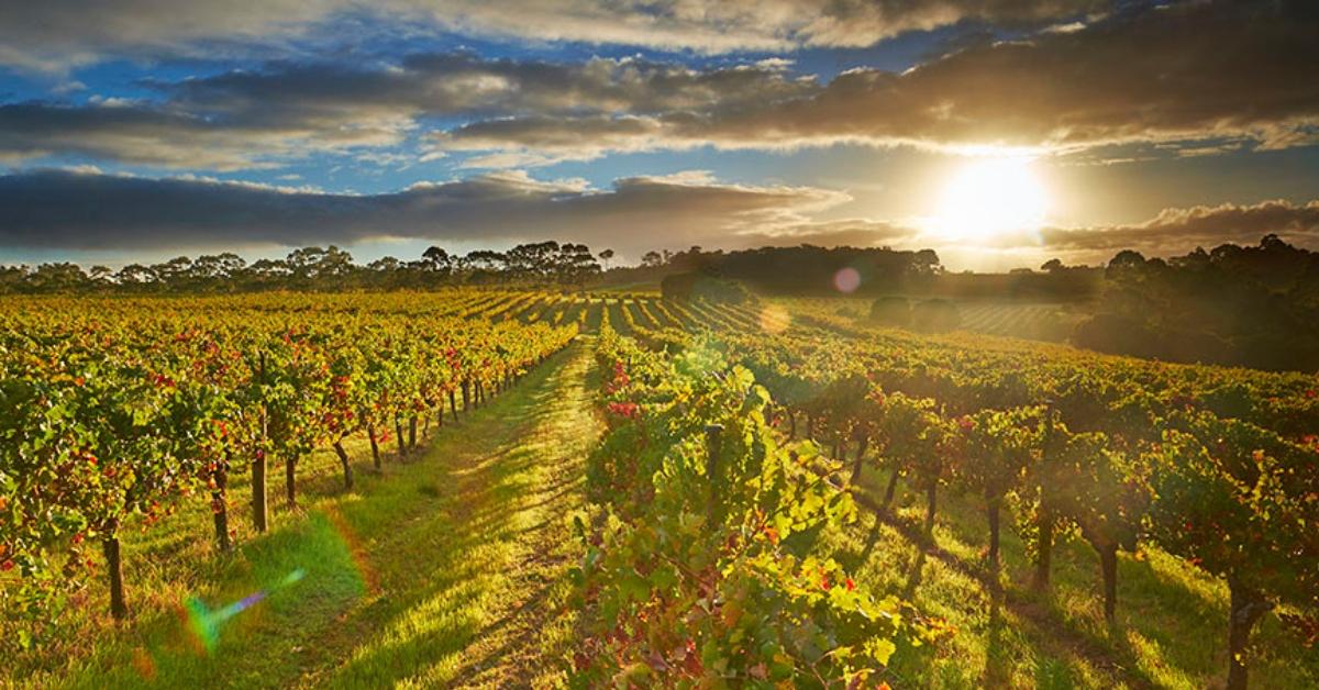 【四月月訂導讀】澳洲頂級酒鄉 - 瑪格麗特河