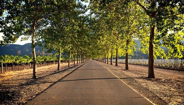 納帕谷葡萄酒公路之旅指南 ( 行前規劃篇 )