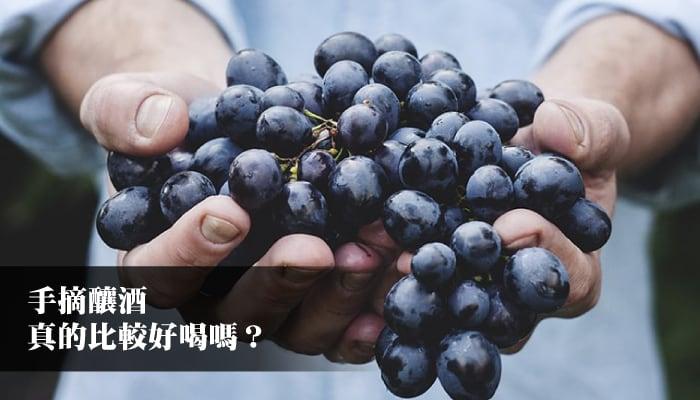 【葡萄酒知識】手工採收釀的酒比較好喝?