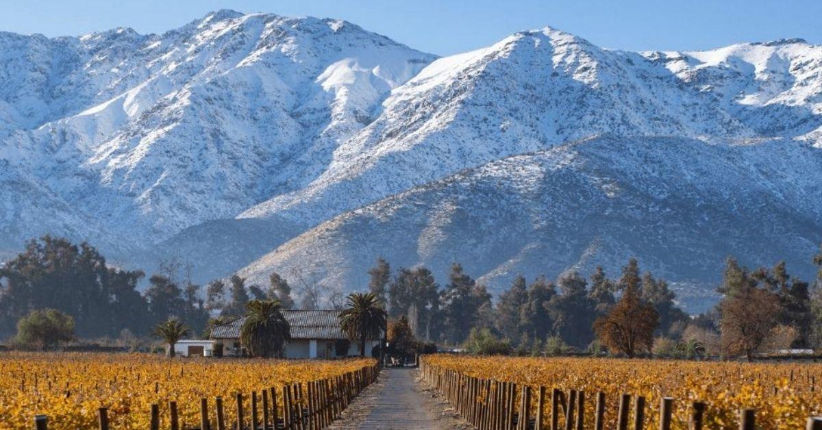超值智利酒上哪找?六大品種與產區一次介紹!
