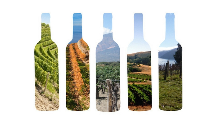 【一張圖秒懂葡萄酒】四大風味象限圖,新手酒款品飲輕鬆學!