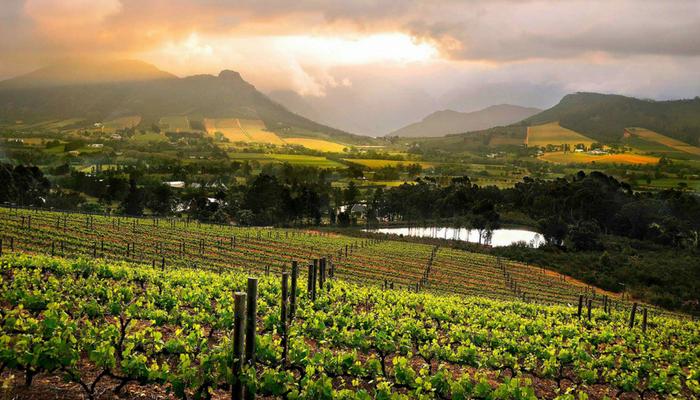 【產區介紹】被忽略的葡萄酒產區 — 南非