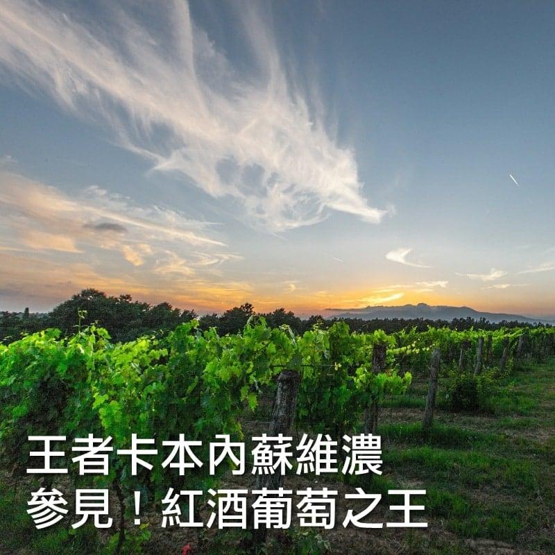 Grape red cabernet index