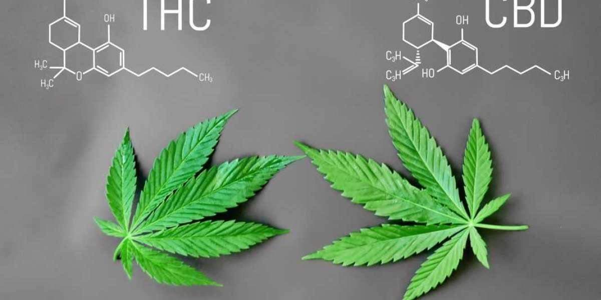 The smart Trick of Cannabis Oil Complicates Drug Testing - Shrm That Nobody is Talking About
