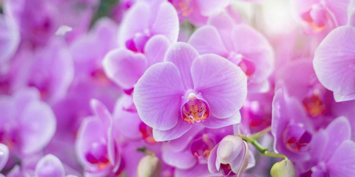 All about ORCHIDS.