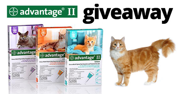 Free Single Dose Of Free Advantage II For Cats