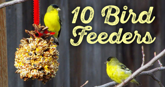 10 Bird Feeders You Can Make At Home