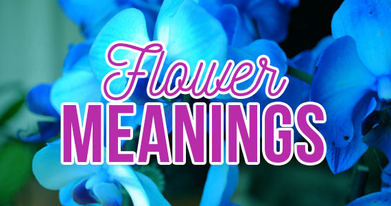 Little Known Facts: The Secret Meanings of Flowers