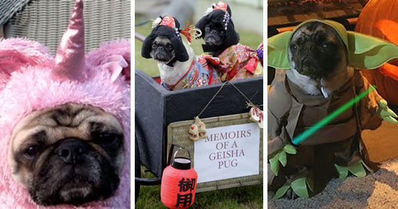 The Cutest Pugs That Killed Halloween