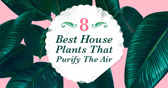 8 Best House Plants That Purify The Air