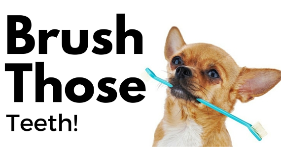 Easy Tips To Brush Your Dog's Teeth