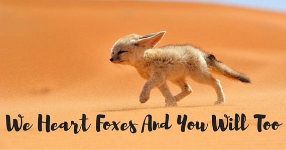 10 Times Foxes Killed Us With Cuteness