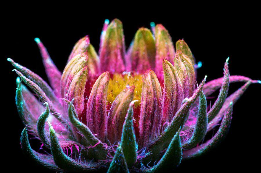 pokey-flower