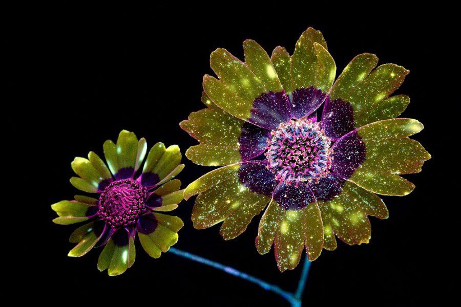 fluffy-flower