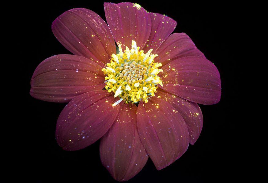 round-flower