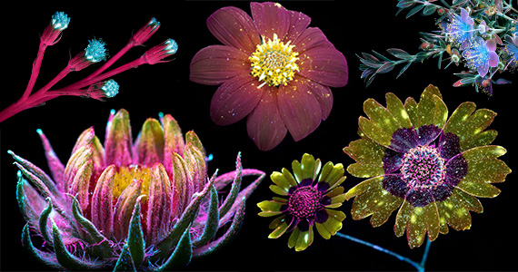 Photographer Captures Mind-Blowing Images of Glowing Flowers