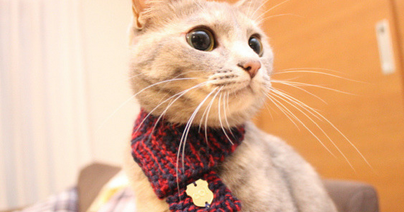 The Latest Feline Fashion Trend In Japan: Cat Scarves!