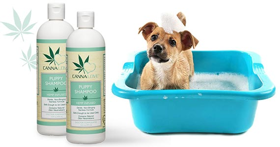 Free Sample of Cannalove Puppy Shampoo
