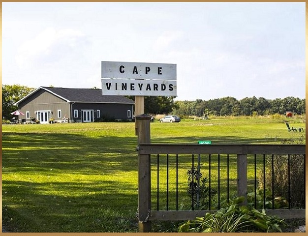 prince edward county cape vineyards