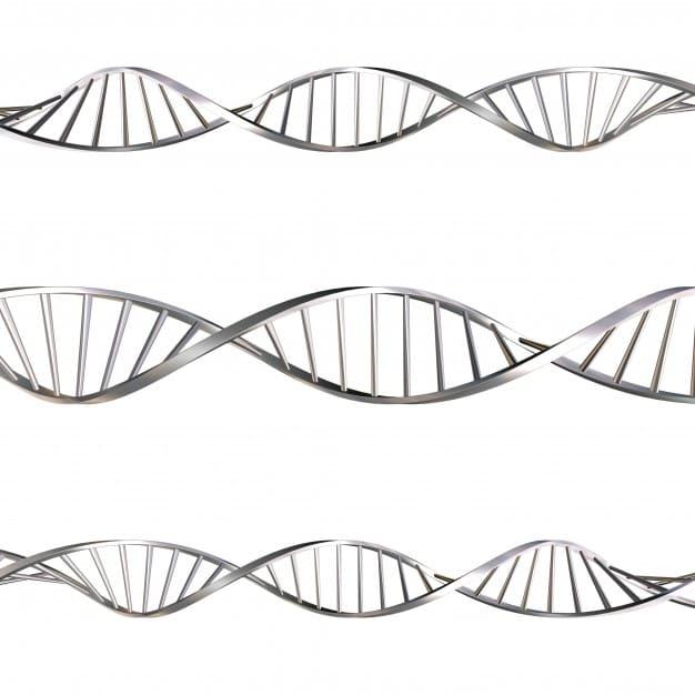 Sel: Pengertian, Struktur, Prokariotik, Eukariotik 1