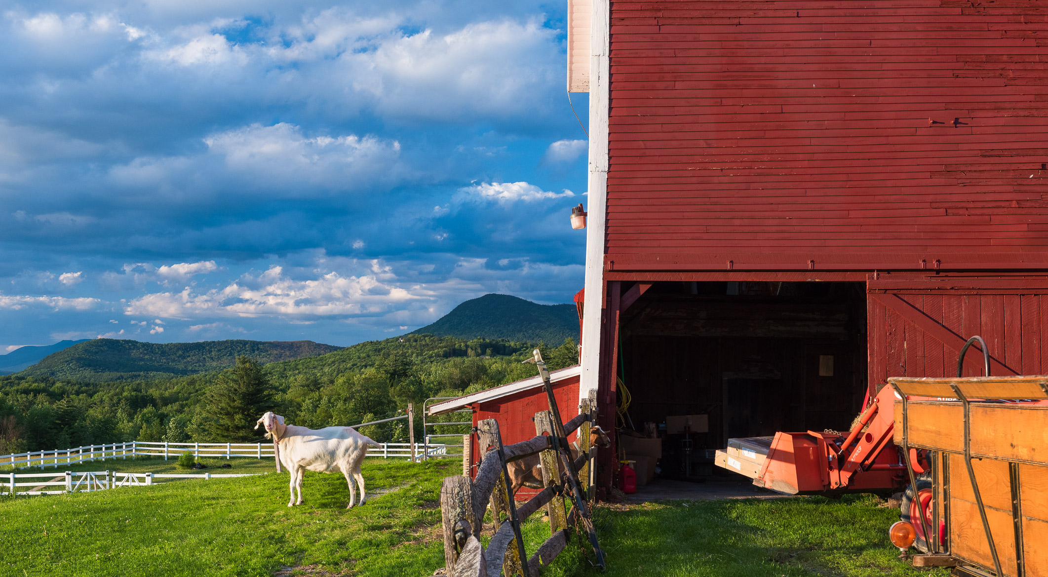 Goats at Mountain Valley Farm, Waitsfield, Vermont