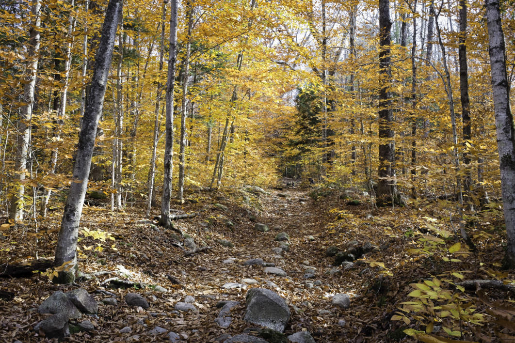 Trail to Champney Falls, Albany, New Hampshire