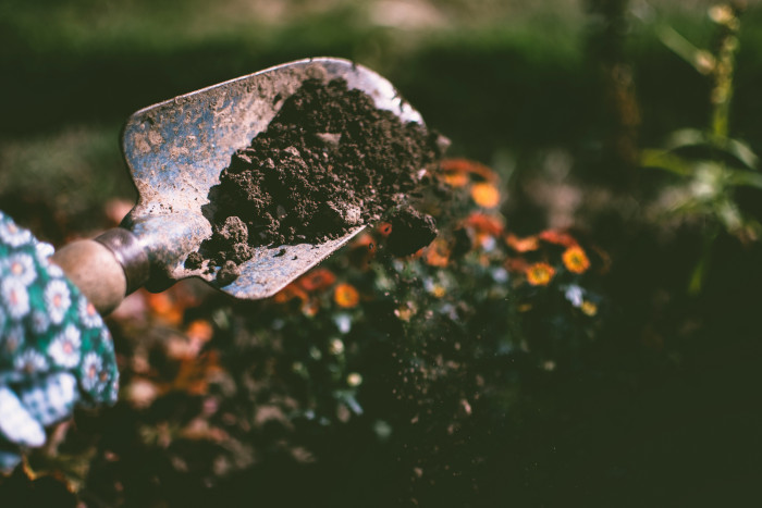 Shovel with dirt planting seeds in a garden