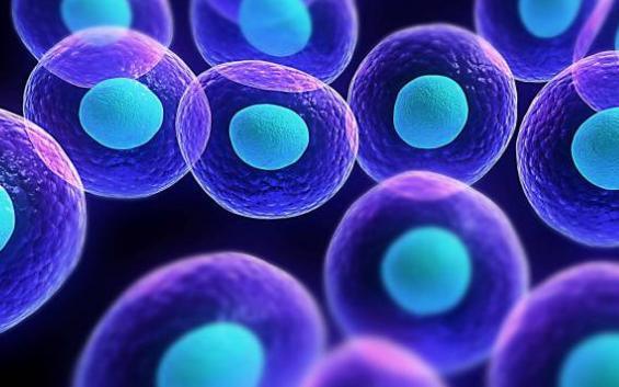 La Terapia de Oxígeno Hiperbárico y la Medicina Regenerativa