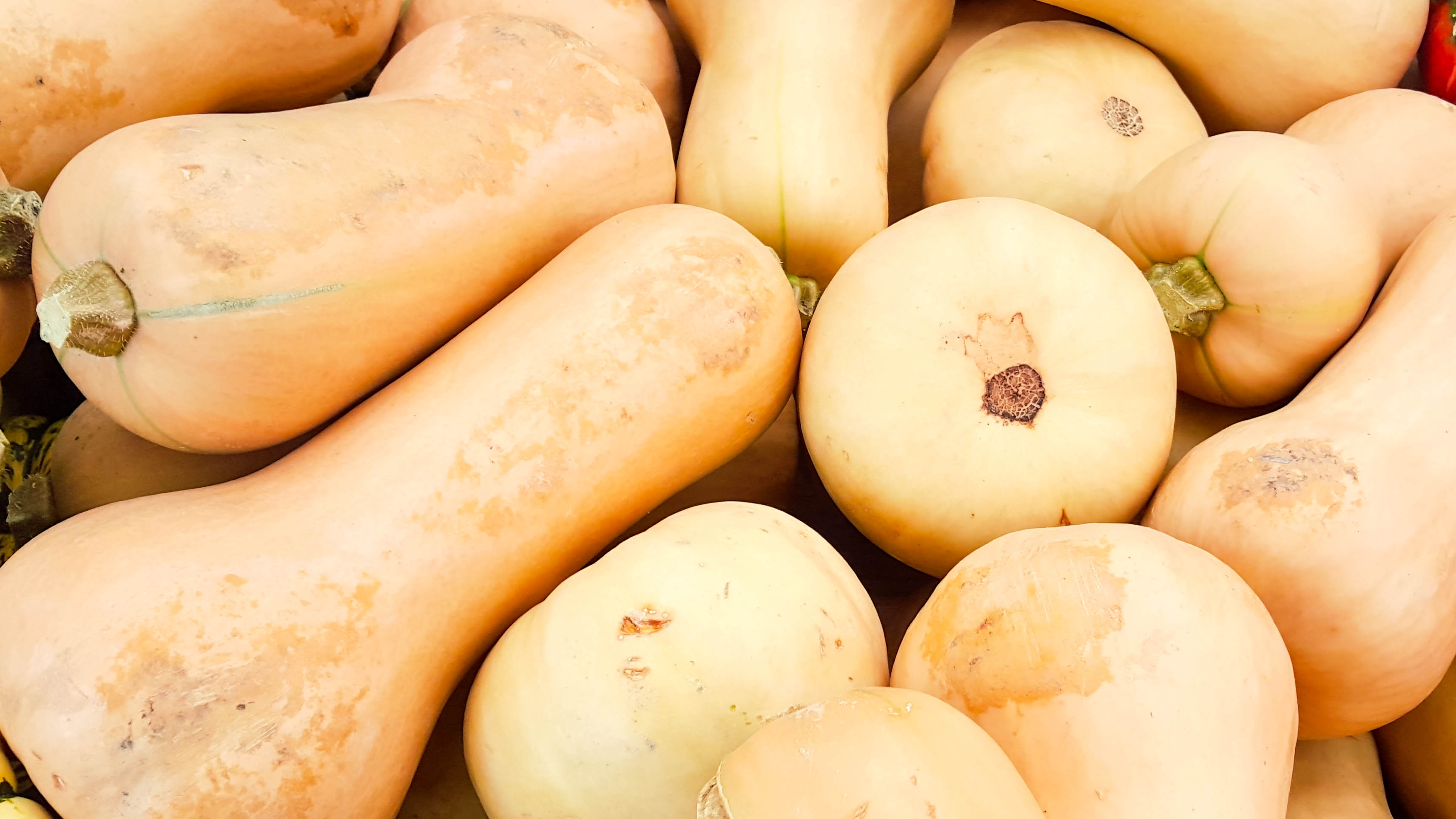 Butternut Squash | Eat Well at Festival Foods