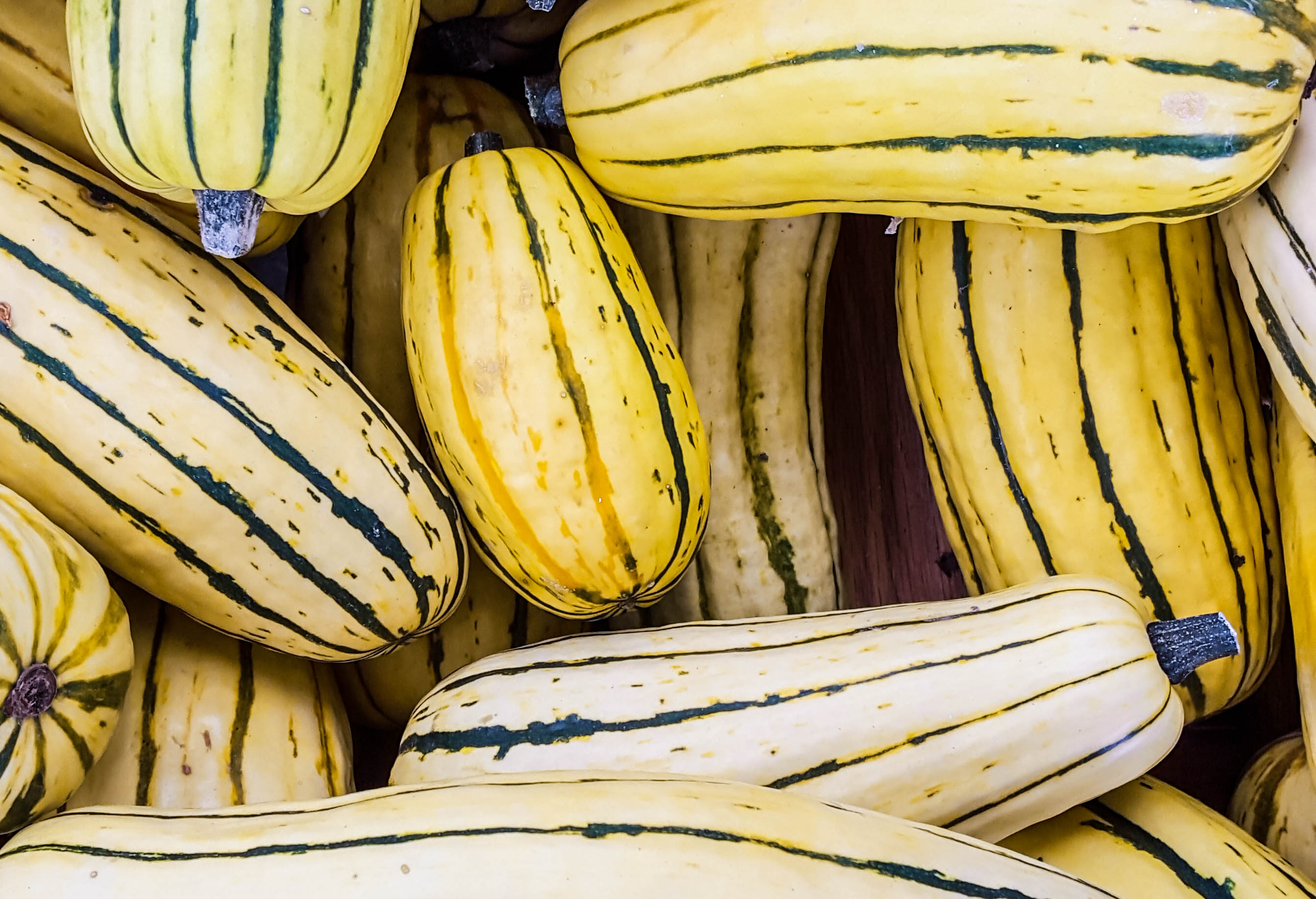 Delicata Squash | Eat Well at Festival Foods